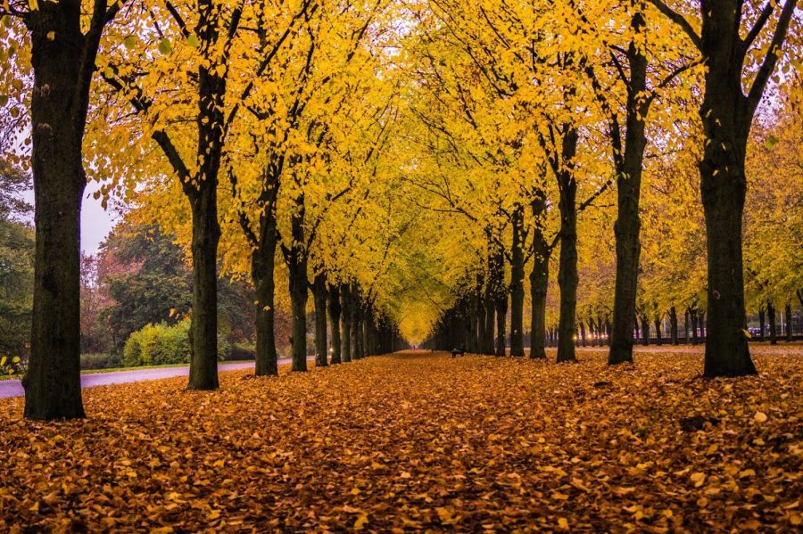 Autumn in Germany - Title: Autumn in Germany